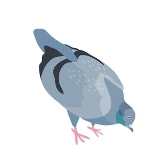Голубь клюет еду плоскую векторную иллюстрацию. птица с темно-серым оперением. пернатый голубь в поисках еды. городская фауна, городской животный мир. милое крылатое животное на белом фоне.