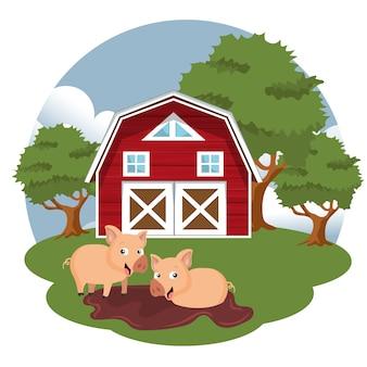 Pigs in farmyard
