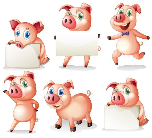 Свиньи, держащие пустые доски