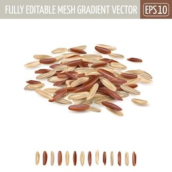 흰색 배경에 혼합 된 갈색과 빨간색 긴 곡물 쌀 더미.