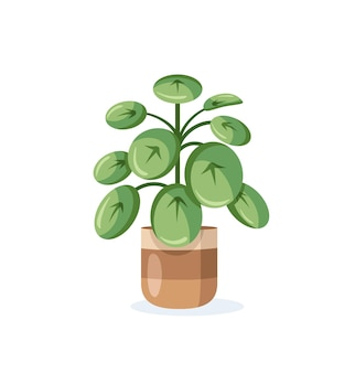 Pilea home plant in flower pot isolated on white background in flat style