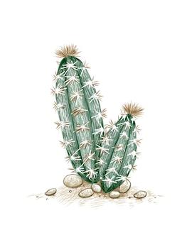 Pilosocereus или tree cactus a сочные растения с острыми шипами для украшения сада