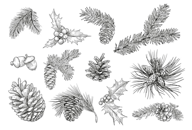 Pine branches isolated hand drawing illustration set