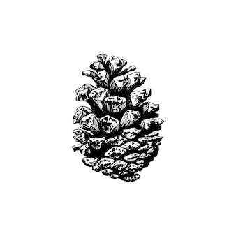Pine cone, hand drawn illustration on white background. vector design for christmas, officinal logotype, organic products symbol.