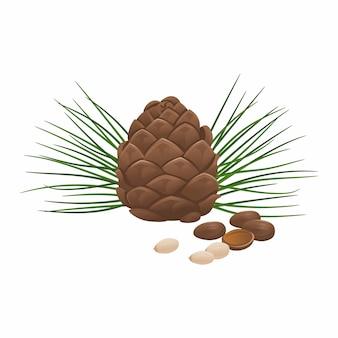 Кедровые орехи и шишка