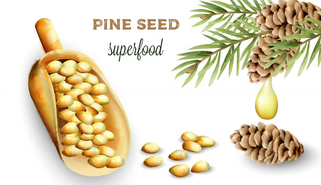 Pine nuts in shovel
