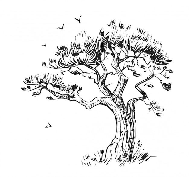 松のスケッチ。手描きイラスト