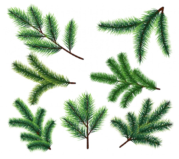 Pine tree branches. christmas fir tree branch. vector xmas decorarion elements