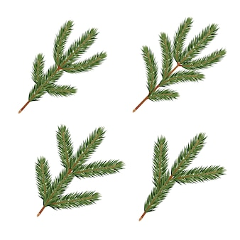 Pine tree branches. realistic xmas decoration elements.
