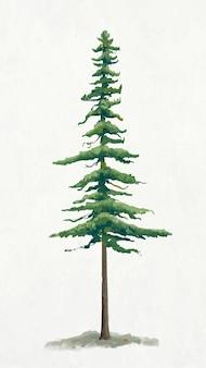 Pine tree element graphic  on plain background