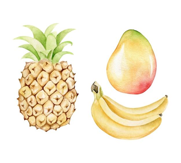 Ананас, банан, манго. акварель тропических фруктов