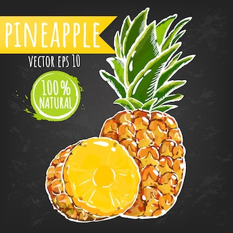 Pineapple. fresh fruit bright sketch style. juicy tropical fruits.