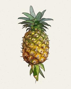 パイナップル、手描きスケッチ。