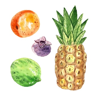 Pineapple, lime, apricot, blueberry. tropical fruits clip art, set. watercolor illustration. raw fresh healthy food. vegan, vegetarian. summer.