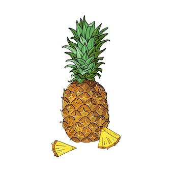 Ананас. летняя тропическая еда для здорового образа жизни. целые фрукты. рисованной иллюстрации. эскиз на белом фоне.