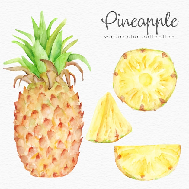 Pineapple watercolor collection