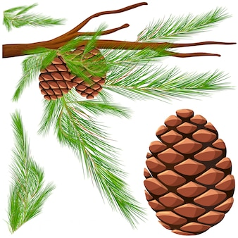 Pinecone on the branch