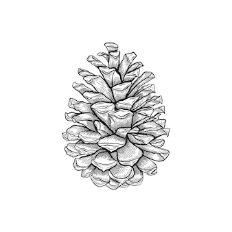 Pinecone engraving vintage illustration