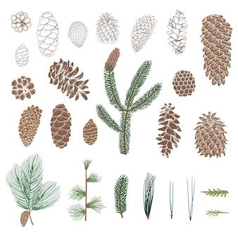 Коллекция pinecone