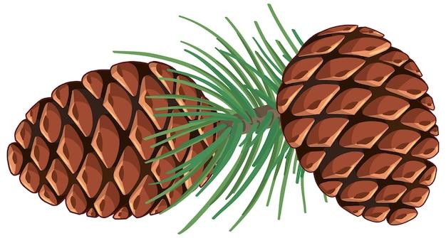 Сосновая кукуруза с сосновыми иглами изолированы