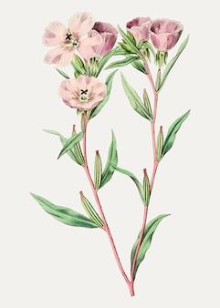 Pink amaryllis branch