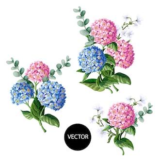 Розовая и голубая гортензия с эвкалиптовыми ветвями на белом