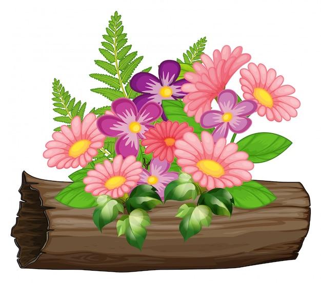 Розовые и фиолетовые цветы герберы ромашки