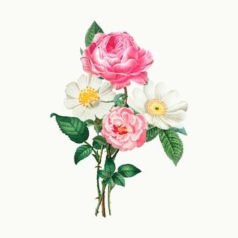 분홍색과 흰색 장미
