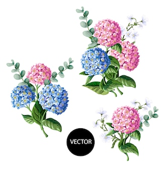 Pink and blue hydrangea with eucalyptus branches isolated on white