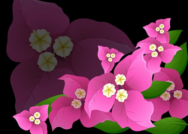 黒背景にピンクブーゲンビリア花