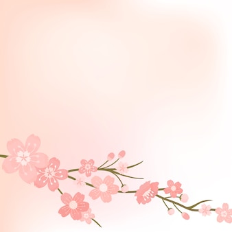 Pink cherry blossom blank background vector