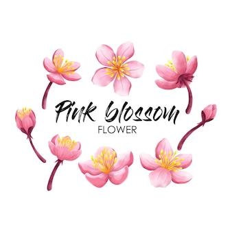 Pink cherry blossom or sakura flower in watercolor inspired vector