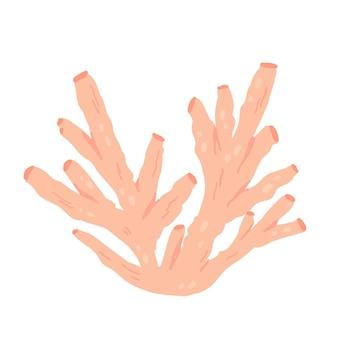 Pink coral reef tropical underwater ocean or sea marine life exotic popular present