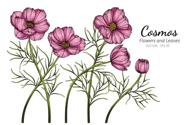 Розовая иллюстрация космоса цветка и листьев рисуя