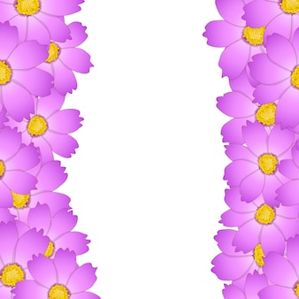 핑크 코스모스 꽃 테두리