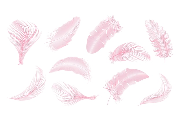 Pink   feathers collection set on a white background.