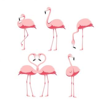Pink flamingo birds set