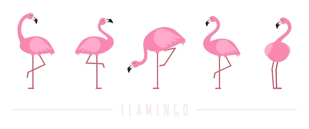Pink flamingo. exotic tropical birds characters.
