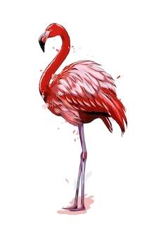 수채화의 스플래시에서 핑크 플라밍고.
