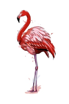 Pink flamingo from a splash of watercolor.