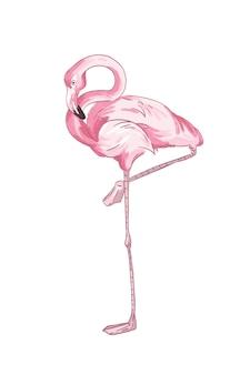 Розовый фламинго векторные иллюстрации. реалистичные рисованной птица, стоящая на одной ноге, изолированные на белом фоне. экзотическая болотная птица с ярким оперением. дикая природа, фауна, тропическая жизнь.