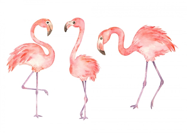 Pink flamingos in watercolor style