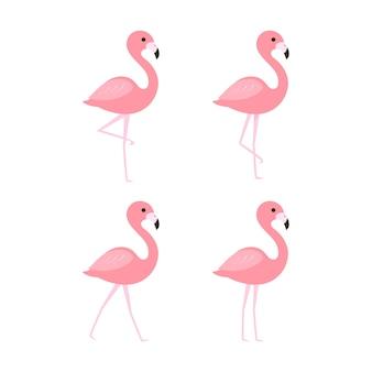 핑크 플라밍고