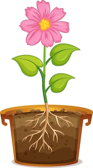 白の土鍋のピンクの花