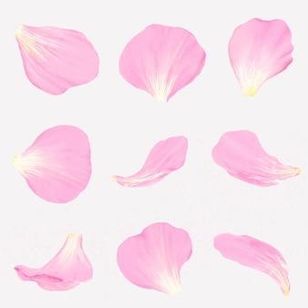Insieme di vettore dell'illustrazione del petalo del fiore rosa