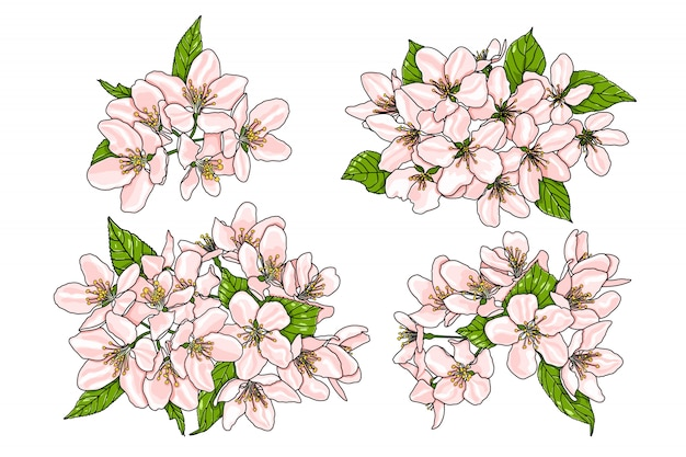 Pink flowers of apple tree with green leaves.