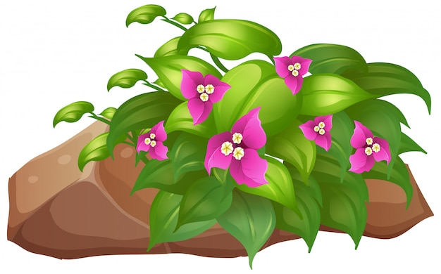 Pink flowers with green leaves on white