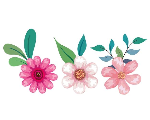葉のデザイン、自然な花の自然の植物の飾りの庭の装飾、植物学をテーマにしたピンクの花