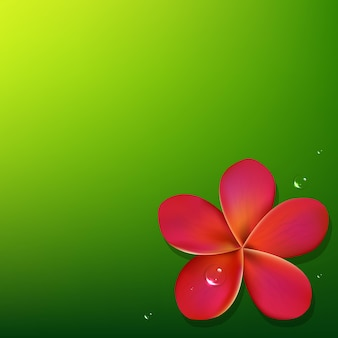 Розовый франжипани с зеленым фоном