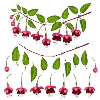 ピンクのフクシアの要素は、白い背景で隔離花の枝のためのコンストラクターを設定します。